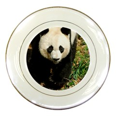 Giant Panda Porcelain Display Plate by AnimalLover