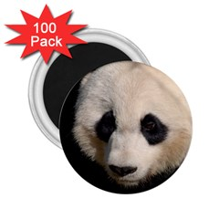 Adorable Panda 2 25  Button Magnet (100 Pack) by AnimalLover