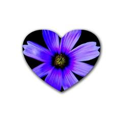 Purple Bloom Drink Coasters 4 Pack (heart)  by BeachBum