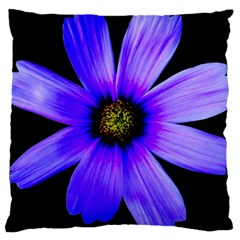 Purple Bloom Large Cushion Case (two Sided)
