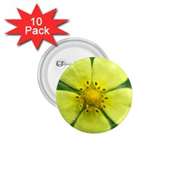 Yellowwildflowerdetail 1 75  Button (10 Pack) by bloomingvinedesign