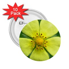 Yellowwildflowerdetail 2 25  Button (10 Pack) by bloomingvinedesign