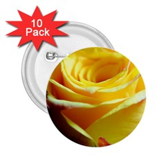 Yellow Rose Curling 2 25  Button (10 Pack) by bloomingvinedesign