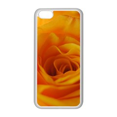 Yellow Rose Close Up Apple Iphone 5c Seamless Case (white) by bloomingvinedesign