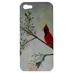 Sweet Red Cardinal Apple Iphone 5 Hardshell Case by rokinronda