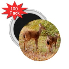 Deer In Nature 2 25  Button Magnet (100 Pack) by uniquedesignsbycassie