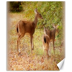 Deer In Nature Canvas 20  X 24  (unframed) by uniquedesignsbycassie