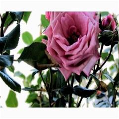 Rose Canvas 16  X 20  (unframed)