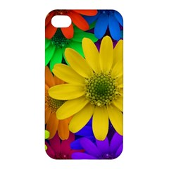 Gerbera Daisies Apple Iphone 4/4s Premium Hardshell Case by StuffOrSomething