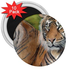 Soft Protection 3  Button Magnet (10 Pack) by TonyaButcher
