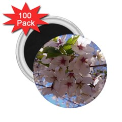 Sakura 2 25  Button Magnet (100 Pack) by DmitrysTravels