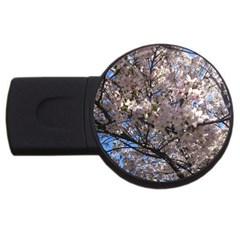 Sakura Tree 2gb Usb Flash Drive (round) by DmitrysTravels