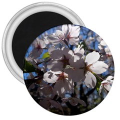 Cherry Blossoms 3  Button Magnet by DmitrysTravels