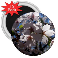 Cherry Blossoms 3  Button Magnet (10 Pack) by DmitrysTravels