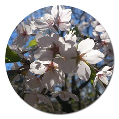 Cherry Blossoms Magnet 5  (round) by DmitrysTravels