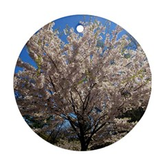 Cherry Blossoms Tree Round Ornament by DmitrysTravels