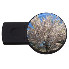 Cherry Blossoms Tree 4gb Usb Flash Drive (round) by DmitrysTravels