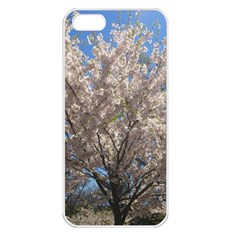 Cherry Blossoms Tree Apple Iphone 5 Seamless Case (white) by DmitrysTravels