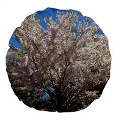 Cherry Blossoms Tree 18  Premium Round Cushion  by DmitrysTravels
