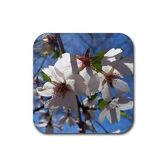 Cherry Blossoms Drink Coaster (square) by DmitrysTravels