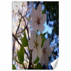 Sakura Canvas 12  X 18  (unframed) by DmitrysTravels