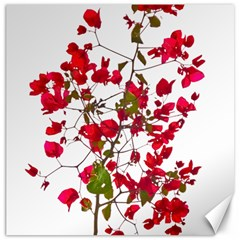 Red Petals Canvas 12  X 12  (unframed) by dflcprints
