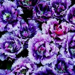 Purple Wildflowers Of Hope Canvas 16  X 16  (unframed) by FunWithFibro