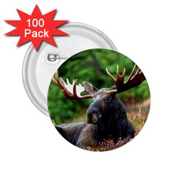 Majestic Moose 2 25  Button (100 Pack) by StuffOrSomething