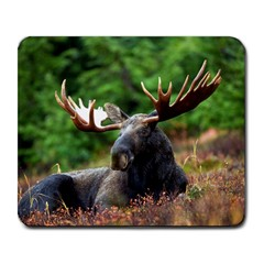 Majestic Moose Large Mouse Pad (rectangle) by StuffOrSomething