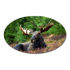 Majestic Moose Magnet (oval) by StuffOrSomething