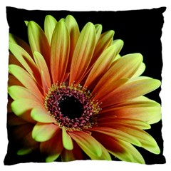 Yellow Orange Gerbera Daisy Large Cushion Case (two Sided)  by bloomingvinedesign