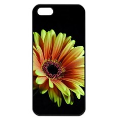 Yellow Orange Gerbera Daisy Apple Iphone 5 Seamless Case (black) by bloomingvinedesign