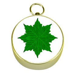 Decorative Ornament Isolated Plants Gold Compass by dflcprints