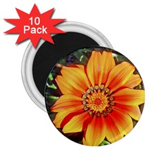 Flower In A Parking Lot 2 25  Button Magnet (10 Pack) by sirhowardlee