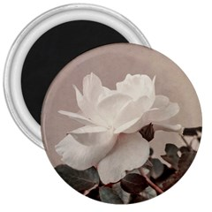 White Rose Vintage Style Photo In Ocher Colors 3  Button Magnet by dflcprints