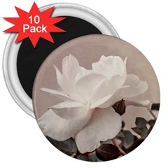 White Rose Vintage Style Photo In Ocher Colors 3  Button Magnet (10 Pack) by dflcprints