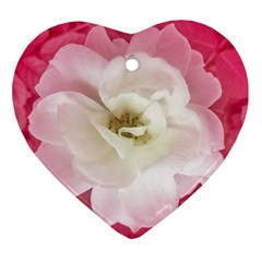 White Rose With Pink Leaves Around  Heart Ornament by dflcprints