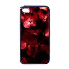 Red Flowers Bouquet In Black Background Photography Apple Iphone 4 Case (black) by dflcprints