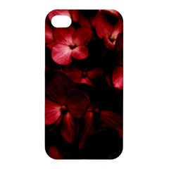 Red Flowers Bouquet In Black Background Photography Apple Iphone 4/4s Premium Hardshell Case by dflcprints