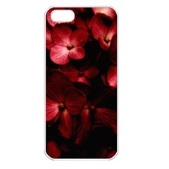 Red Flowers Bouquet In Black Background Photography Apple Iphone 5 Seamless Case (white) by dflcprints