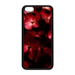 Red Flowers Bouquet In Black Background Photography Apple Iphone 5c Seamless Case (black) by dflcprints