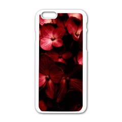 Red Flowers Bouquet In Black Background Photography Apple Iphone 6 White Enamel Case by dflcprints