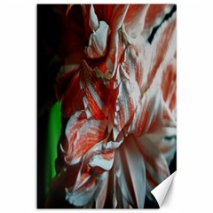 Amaryllis Double Bloom Canvas 12  X 18  (unframed) by bloomingvinedesign