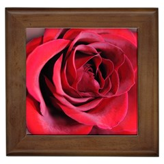 An Open Rose Framed Ceramic Tile by bloomingvinedesign