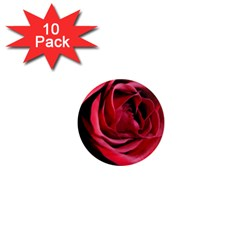 An Open Rose 1  Mini Button Magnet (10 pack) by bloomingvinedesign