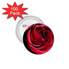 An Open Rose 1 75  Button (100 Pack) by bloomingvinedesign