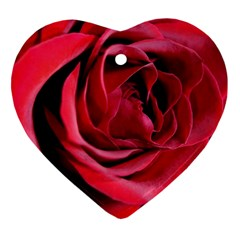 An Open Rose Heart Ornament (Two Sides) by bloomingvinedesign