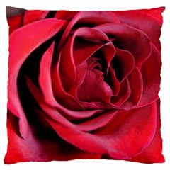 An Open Rose Large Cushion Case (two Sided)  by bloomingvinedesign