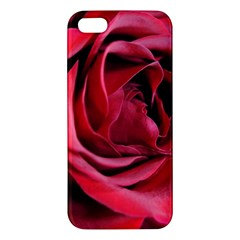 An Open Rose Iphone 5s Premium Hardshell Case by bloomingvinedesign