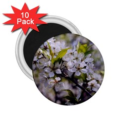 Apple Blossoms 2 25  Button Magnet (10 Pack) by bloomingvinedesign